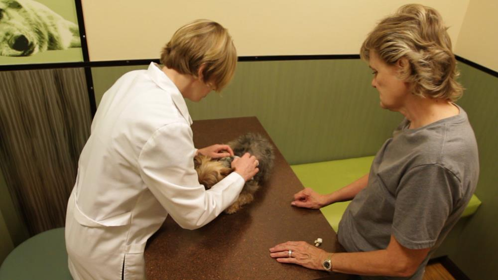 new clients   animal allergy and dermatology specialists in las vegas