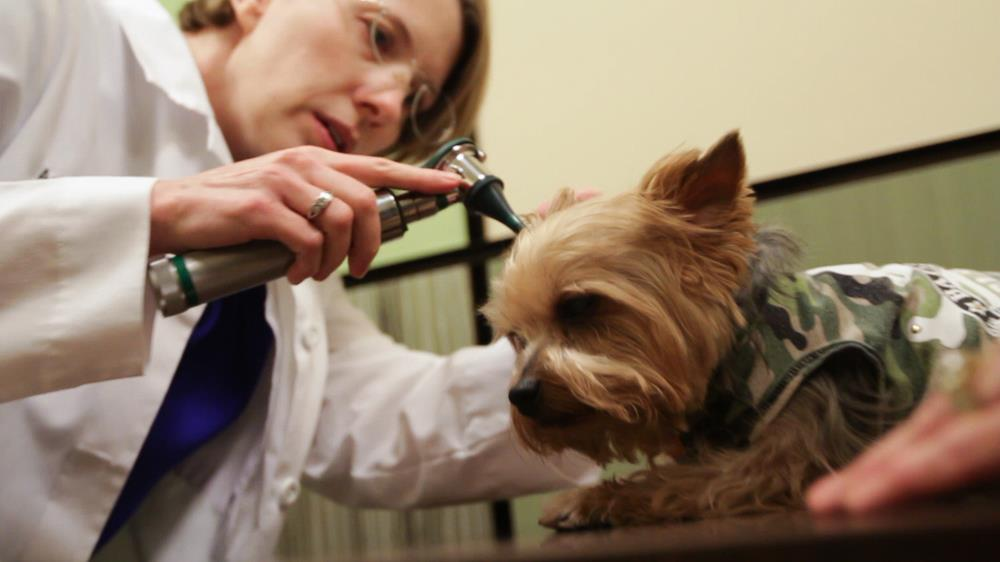 new clients   animal allergy and dermatology specialists